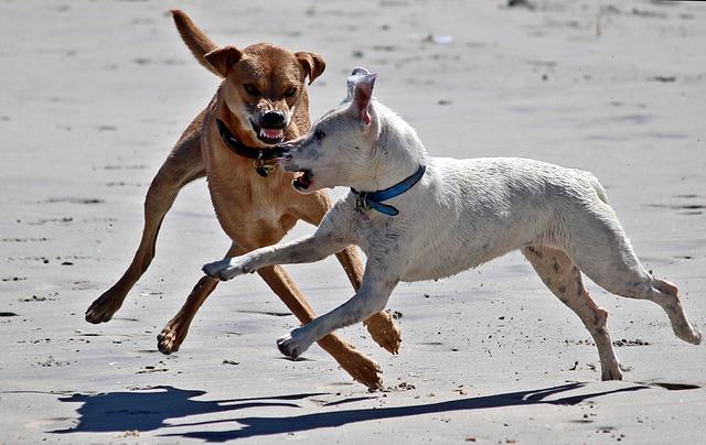 staten island dog bite lawyer