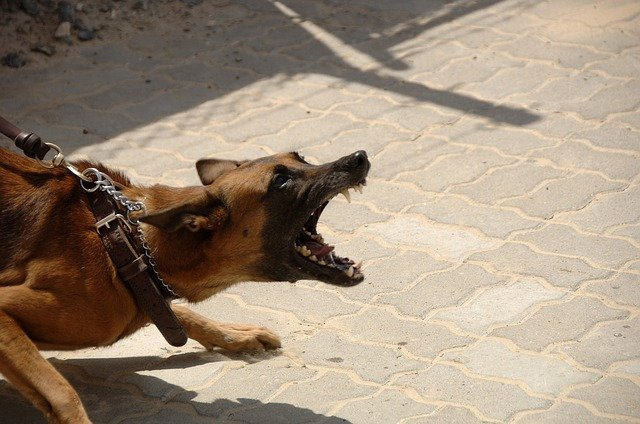 veterinary negligence, barking dog